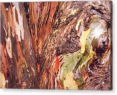 Eucalyptus Tree Acrylic Print