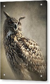 Acrylic Print featuring the photograph European Eagle Owl by Ethiriel  Photography