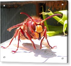 Acrylic Print featuring the photograph European Hornet by Chad and Stacey Hall