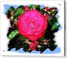 Europeana Roses And Raindrops Acrylic Print by Will Borden