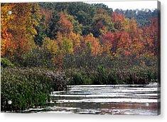 Even Swamps Have Beauty Acrylic Print by Kim Galluzzo Wozniak