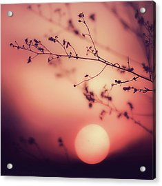 Evening Delight Acrylic Print by Jack Wassell Photography