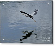Acrylic Print featuring the photograph Evening Flight Reflection by Nava Thompson