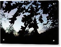 Evening Silhouette Acrylic Print by Angelika MacDonald