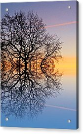 Evening Sky Trails Acrylic Print by Sharon Lisa Clarke