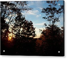 Evening Through The Trees Acrylic Print by Angelika MacDonald