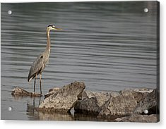 Acrylic Print featuring the photograph Ever Alert by Eunice Gibb