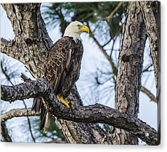 Ever Watchful Acrylic Print