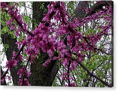Acrylic Print featuring the photograph Everything Spring by Elizabeth  Sullivan
