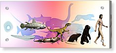 Evolution Of Man Acrylic Print by Christian Darkin