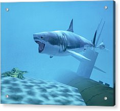 Example Of Reality Centre Graphics, Shark Acrylic Print by David Parker