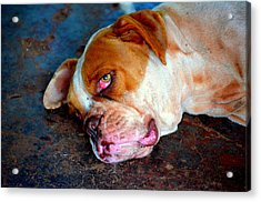 Exhausted Acrylic Print by Paulo Zerbato