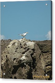 Exoctic Birds Acrylic Print by Frances G Aponte