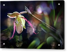 Exotic Alien  Acrylic Print by Richard Piper