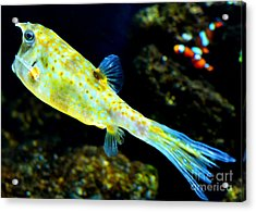 Exotic Fish Acrylic Print by Pravine Chester
