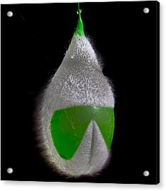 Exploding Water Balloon 2 Acrylic Print by Christoffer Rathjen