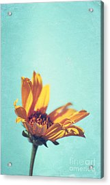 Expression - S03et01 Acrylic Print by Variance Collections