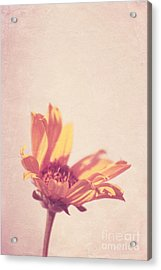 Expression - S07ct01 Acrylic Print by Variance Collections