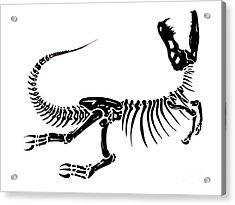 Extinction Acrylic Print by Jack Norton