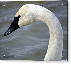 Acrylic Print featuring the photograph Extreme Close Up by Brian Stevens