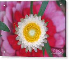 Acrylic Print featuring the photograph Eye Candy Photography by Tina Marie
