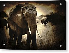 Eye Catching Moments Acrylic Print by Jess Easter