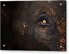 Eye Of Thai Elephant Acrylic Print by presented by Zolashine