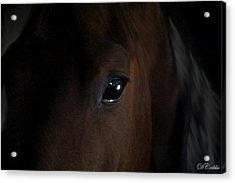 Acrylic Print featuring the photograph Eye Of The Beholder by Davandra Cribbie