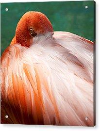 Eye Of The Flamingo Acrylic Print by Steven Heap