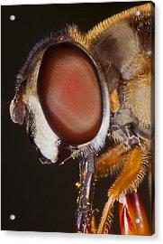 Eye Of The Fly Acrylic Print