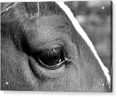 Eye Of The Horse Black And White Acrylic Print by Sandi OReilly