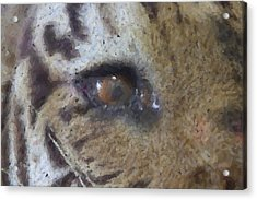 Acrylic Print featuring the photograph Eye Of The Tiger by Donna G Smith