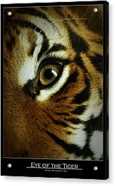 Eye Of The Tiger Acrylic Print by Leito R