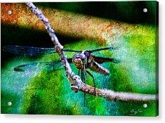 Eye To Eye Acrylic Print by Barry Jones