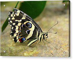 Acrylic Print featuring the photograph Eye To Eye With A Butterfly by Laurel Talabere