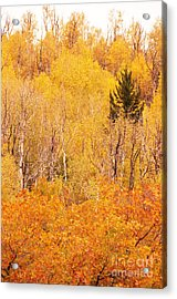 Eyeful Of Color Acrylic Print by Bob and Nancy Kendrick