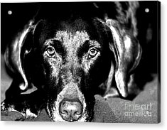 Acrylic Print featuring the photograph Eyes by Leslie Leda