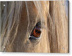 Eyes Of Beauty.. Acrylic Print by Al  Swasey