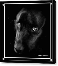 Eyes Of His Heart Acrylic Print by Sherri's Of Palm Springs
