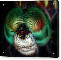 Eyes Of The Dragon Acrylic Print