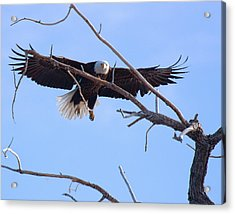 Acrylic Print featuring the photograph Eyes On The Prize by Jim Garrison
