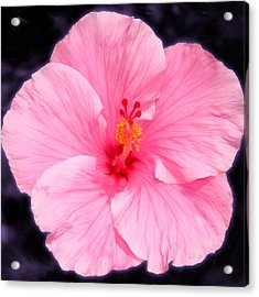 Face Hibiscus Acrylic Print by Marcos Porcayo