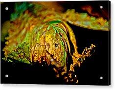 Face Leaf Acrylic Print by Anita Megyesi