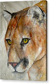Face Of Determination Acrylic Print