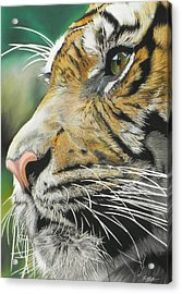 Face Of The Hunter Acrylic Print by Paul Miners