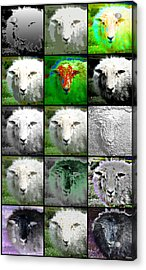 Facets Of Innocence Acrylic Print