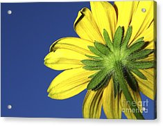 Acrylic Print featuring the photograph Facing The Sun by Sherry Davis