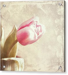 Faded By The Light Acrylic Print by Cathie Tyler
