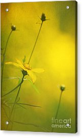 Faded Dreams Acrylic Print by Darren Fisher