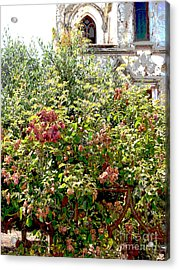 Faded Flowers Acrylic Print by David Peters